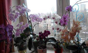 Никогда не держите орхидею дома! В офисе — можно, дома — нет