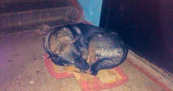 Собака уже год живет под дверью хозяев, которые ее выгнали