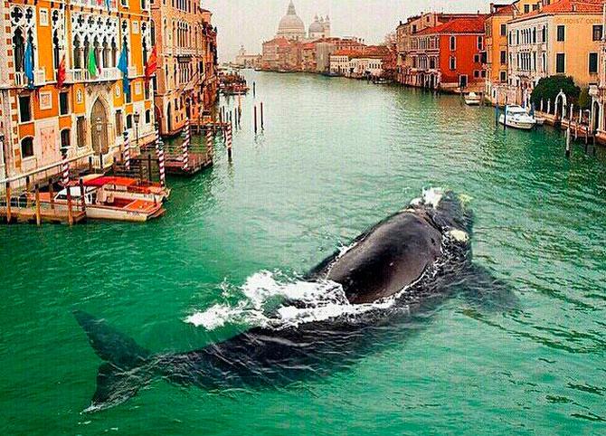 В Венецию заплыл живой кит!