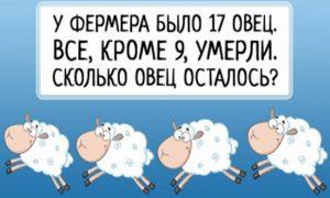 7 логических загадок для взрослых и детей: взорви свой мозг!