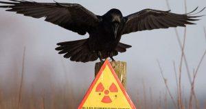 Чернобыль спустя 30 лет после катастрофы… Исследователи поражены тому, что здесь сейчас происходит!