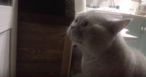 «Открой мне!» — кот просит хозяйку открыть ему дверь. Такого вы еще не видели