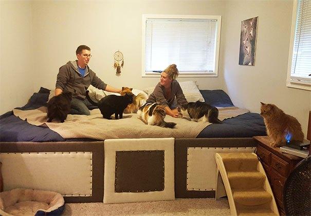 Забавные фото из жизни людей, у которых дома более трёх питомцев