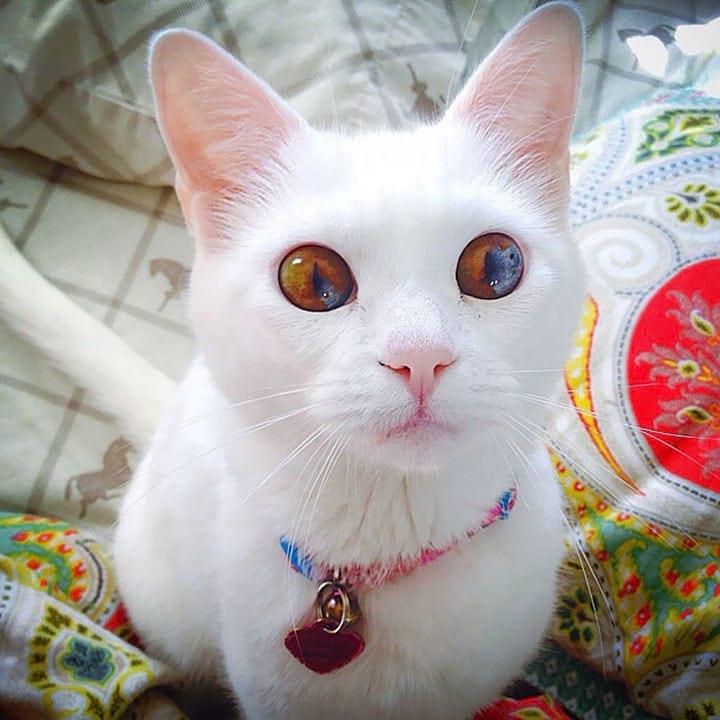 Топ самых красивых котов мира