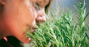 Самая мощная трава для сердца, надпочечников, нарушение мозгового кровообращение, суставов, кожи, волос и не только…