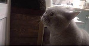 «Открой мне!» — кот просит хозяйку открыть ему дверь. Такого вы еще не видели…