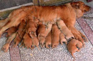 Гордые пушистые мамочки и их очаровательные малыши.