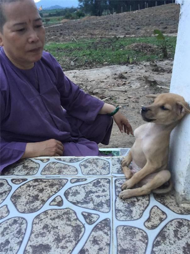 Обнимающиеся щенки из буддийского храма во Вьетнаме покорили весь мир!