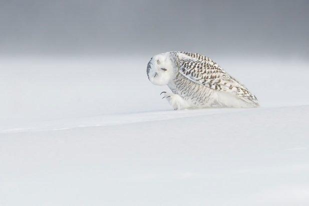 20 самых шедевральных снимков National Geographic