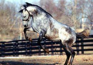 Самые красивые лошади в мире. Глаз не оторвать!