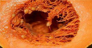 Полезные свойства тыквы для организма! Такую информацию нужно знать!