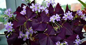 Десять комнатных растений, которые принесут в дом счастье и любовь