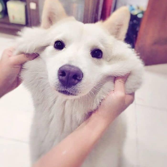 20 прелестных собак, чьи щёчки срочно должны быть потисканы