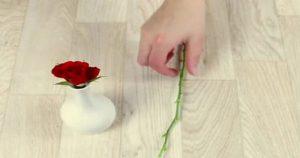 Розы воткнули в картошку. Спустя 2 месяца случилось нечто поразительное и прекрасное!