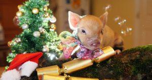 Новый 2019 год свиньи: в чем встречать и что приготовить.