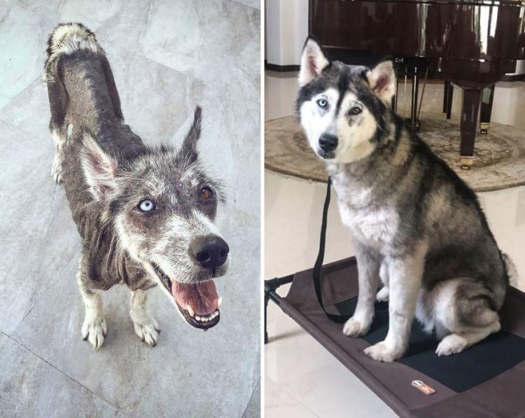 17 фотографий собак до и после приюта, которые тронут вас до глубины души