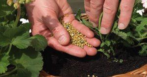 Оживят даже сухие кусты: 10 подкормок для комнатных цветов
