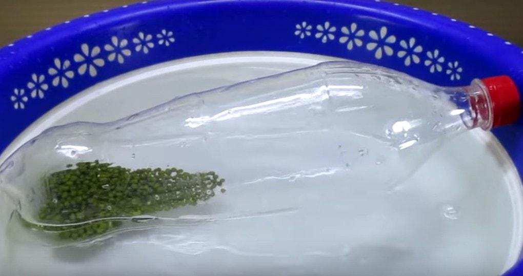 Удивительный лайфхак! Использование пластиковой бутылки для выращивания ростков бобовых