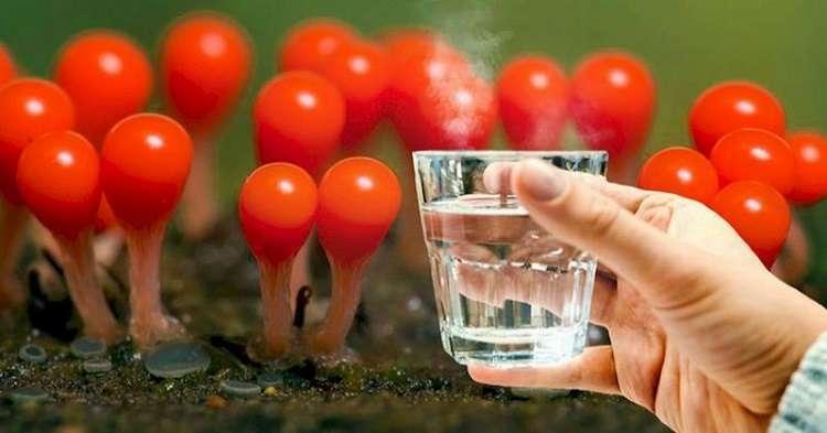 Как правильно пить воду — открыт секрет долголетия тибетских монахов