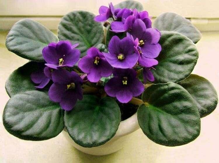 Цветы, которые привлекают в дом и любовь и счастье. Топ-10 самых нужных растений!