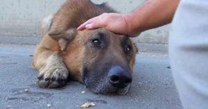 Парень просто погладил собаку, бездомный пес лег и заплакал