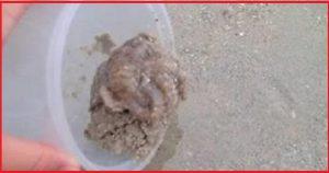 Мужчина выпустил в море спасенного осьминога и в ответ получил то, что запомнит на всю свою жизнь!