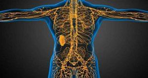 Заболевания суставов — это заболевания лимфатической системы