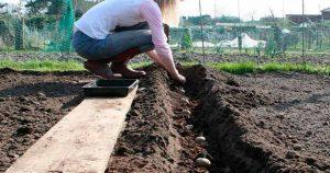 Когда нельзя сажать и сеять. Полезные народные приметы для садоводов-огородников!