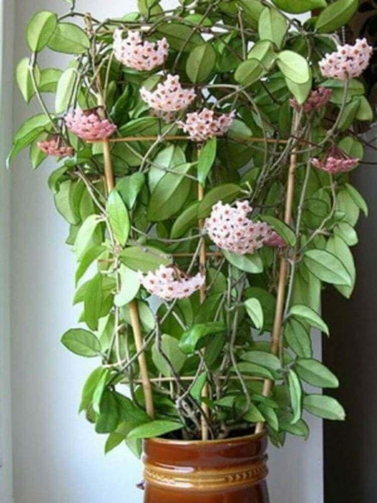 Эти цветы приносят в дом любовь и счастье. Топ-10 самых необходимых растений!