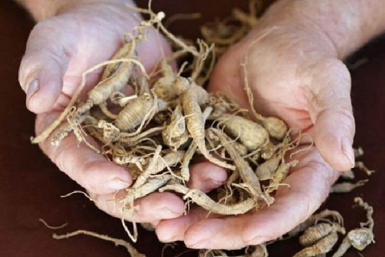Целебные травы, которые проникают в суставы и восстанавливают хрящи