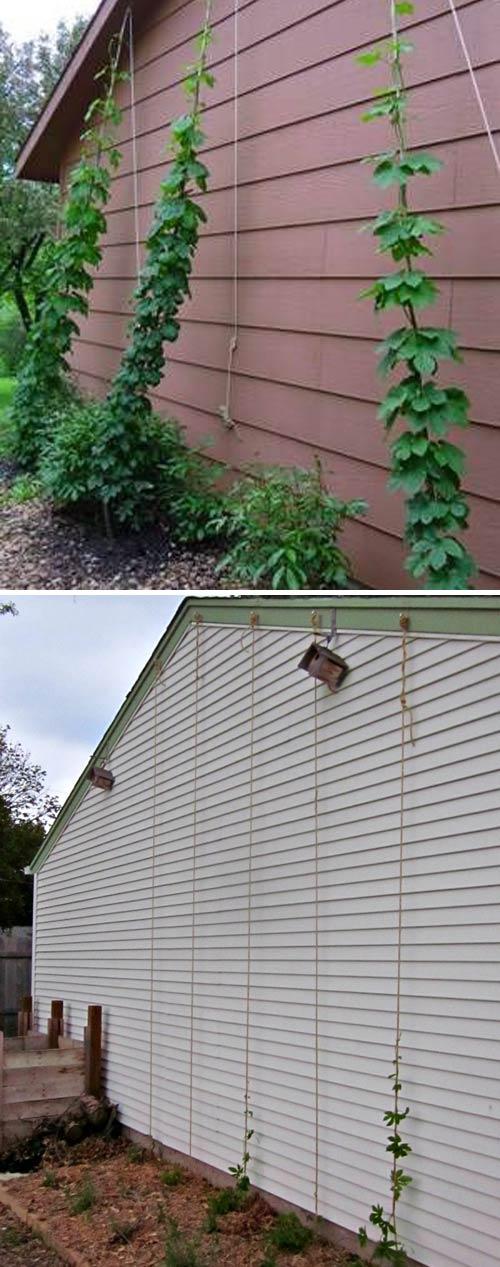 Эффективные способы создания подпорок для обустройства грядок на даче
