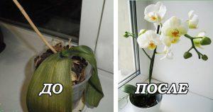 7 важных секретов по уходу за орхидеями. Теперь она будет цвести круглый год.