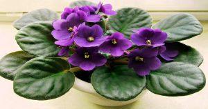10 домашних растений которые принесут счастье и добавят уюта