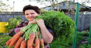 Как правильно нужно сеять морковь
