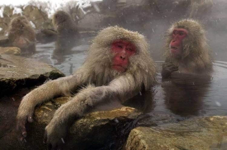 Разговор начистоту: как часто нам всем нужно стирать, мыться и мыть голову?