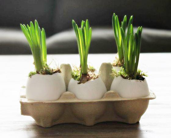 Эффективный способ, как вырастить тюльпаны и нарциссы в вазе без почвы