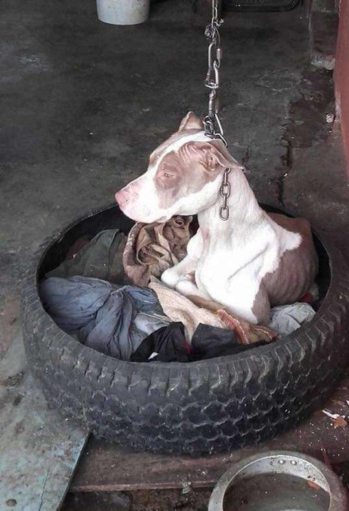 Хозяин держал собаку на такой короткой цепи, что она даже не могла лечь