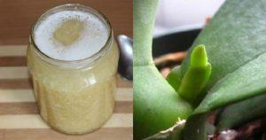 Как приготовить чесночную вкусняшку для обильного цветения орхидей