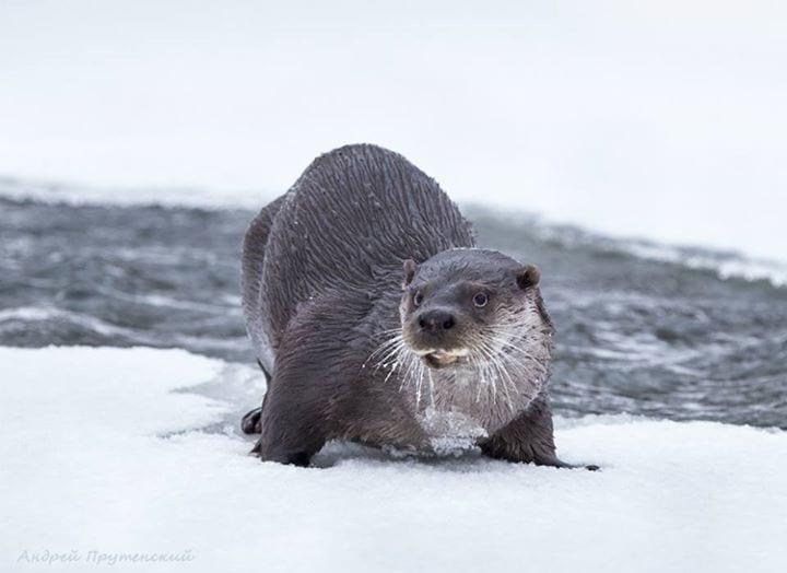 Каждое утро мужчина идет к пруду, чтобы увидеть друга, который ждет его в любую погоду
