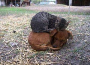 — Ой, ну и собаку купили… Иди сюда, горемыка, пожалею!