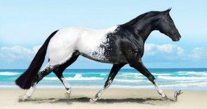 Подборка невероятно красивых лошадей планеты