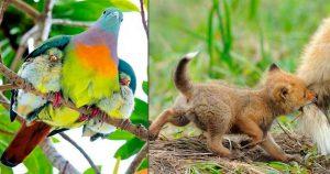 Мама, она и у животных мама! Эти снимки покажут нежность самых хищных мамочек