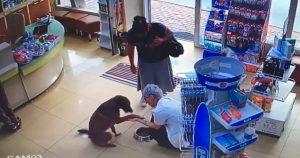 Камеры засняли, как умный пес зашел в аптеку и попросил о медицинской помощи