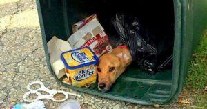 Переезжая к бойфренду, девушка выбросила своего пса в мусорный контейнер