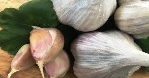 Как правильно хранить чеснок! 3 ингредиента помогут долгому хранению
